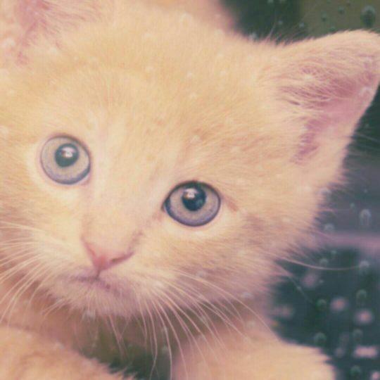子猫 水滴の Android スマホ 壁紙