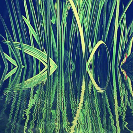 葦 緑の Android スマホ 壁紙