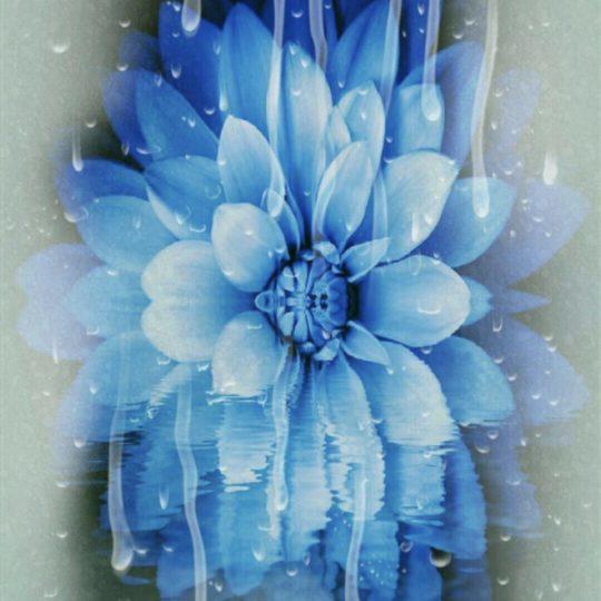 花 青の Android スマホ 壁紙