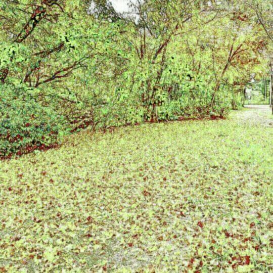 木々 落ち葉の Android スマホ 壁紙