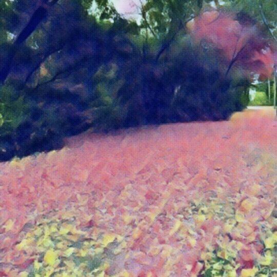 木 花の Android スマホ 壁紙