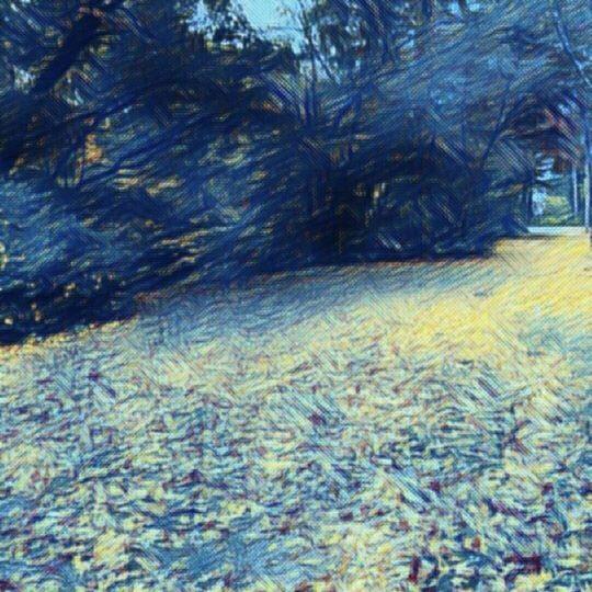 落ち葉 景色の Android スマホ 壁紙