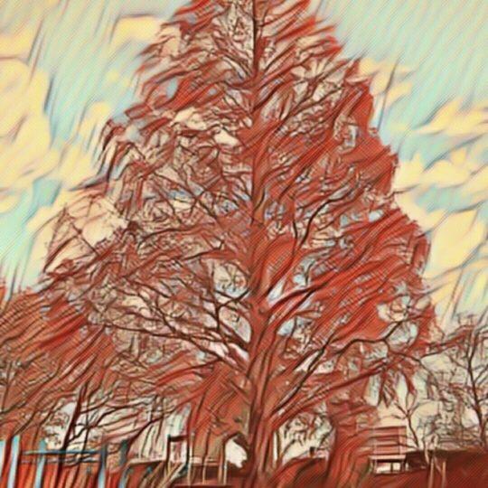 木 公園の Android スマホ 壁紙