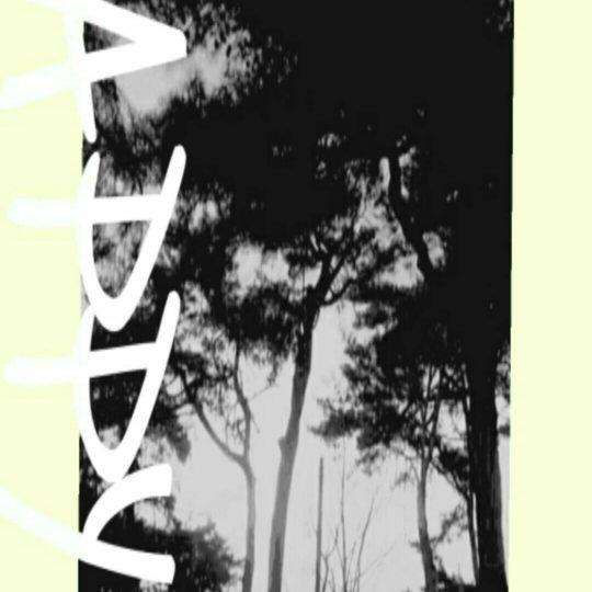 水辺 木の Android スマホ 壁紙