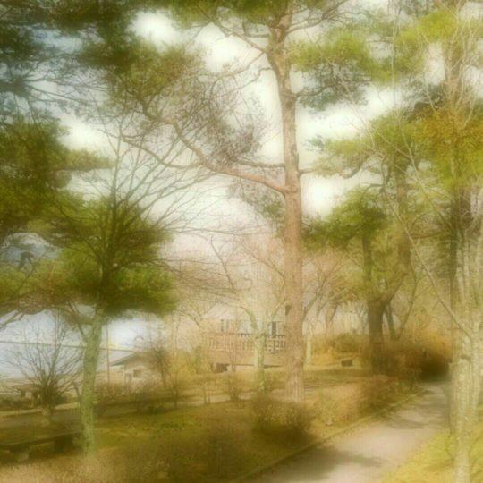 遊歩道 木の Android スマホ 壁紙