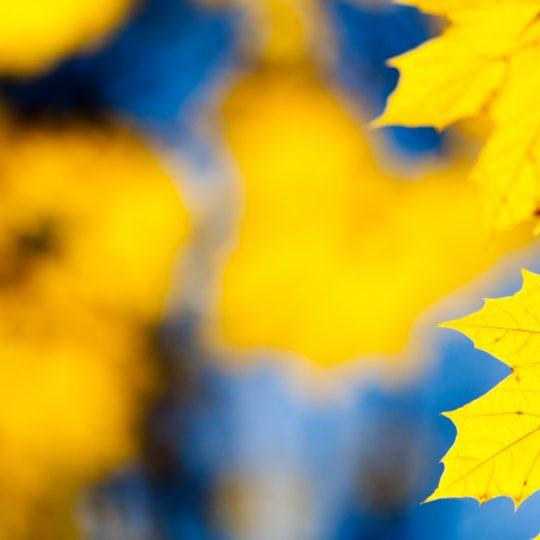 自然紅葉黄の Android スマホ 壁紙