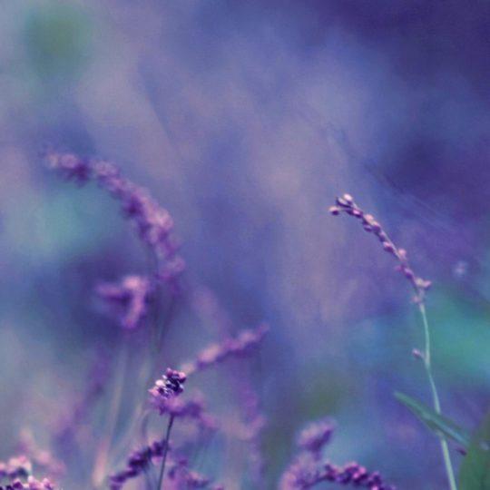 自然花紫の Android スマホ 壁紙