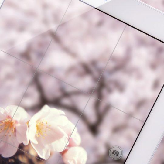 AppleiPad花の Android スマホ 壁紙