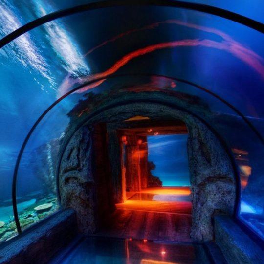 風景水族館青の Android スマホ 壁紙