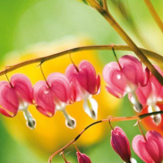 自然花桃緑の Android スマホ 壁紙