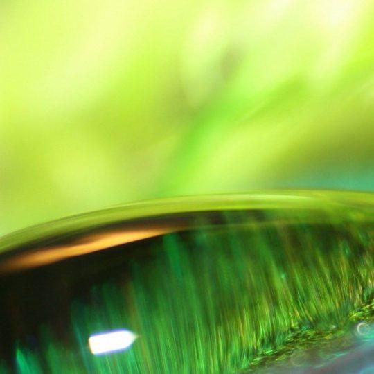 自然水滴緑の Android スマホ 壁紙