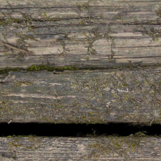 壁木緑茶の Android スマホ 壁紙
