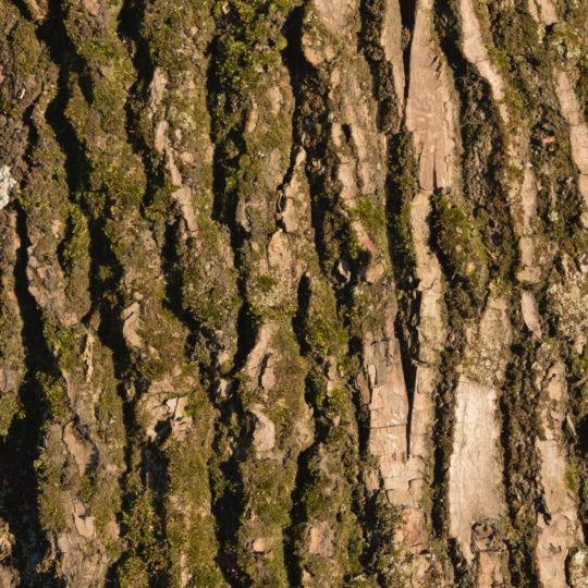 緑茶木の Android スマホ 壁紙