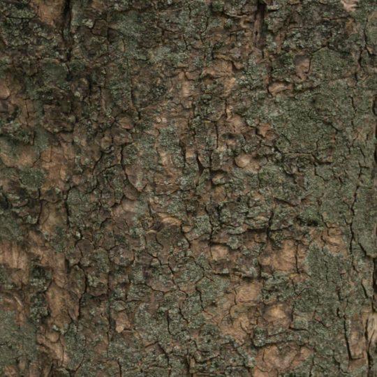 木苔緑茶の Android スマホ 壁紙