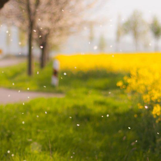 景色ぼかし花黄緑の Android スマホ 壁紙
