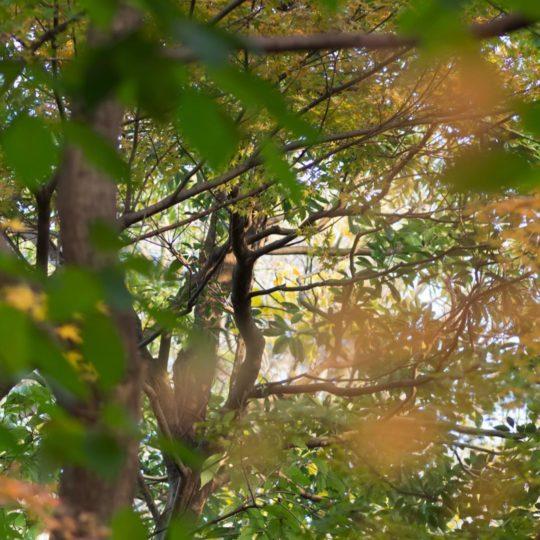 風景自然木の Android スマホ 壁紙