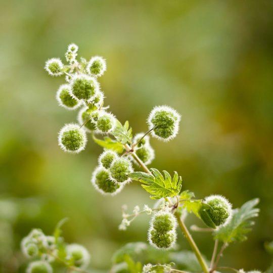 自然草緑の Android スマホ 壁紙