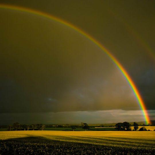 風景草原虹の Android スマホ 壁紙