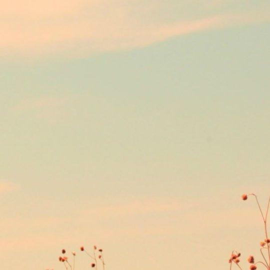 風景空の Android スマホ 壁紙
