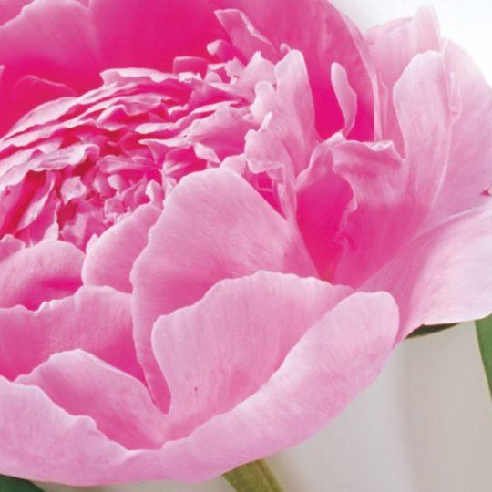 自然花桃の Android スマホ 壁紙