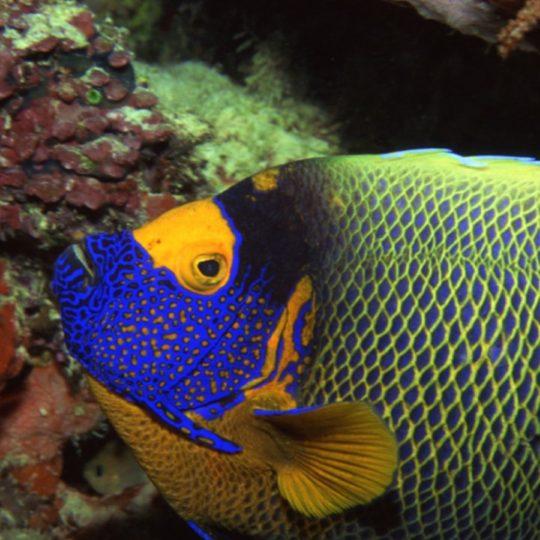 動物魚緑の Android スマホ 壁紙