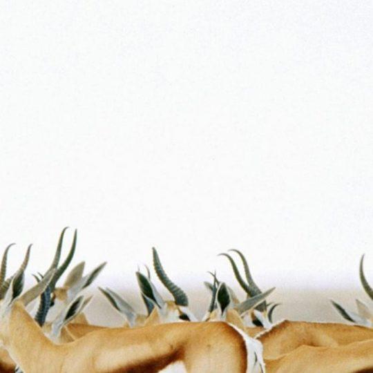 動物鹿の Android スマホ 壁紙