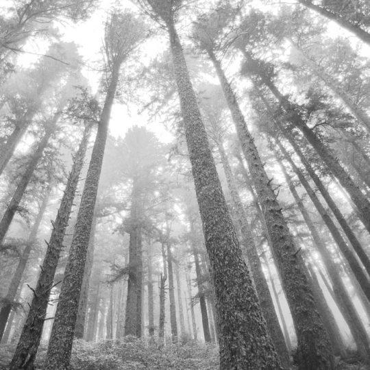 風景森モノクロの Android スマホ 壁紙