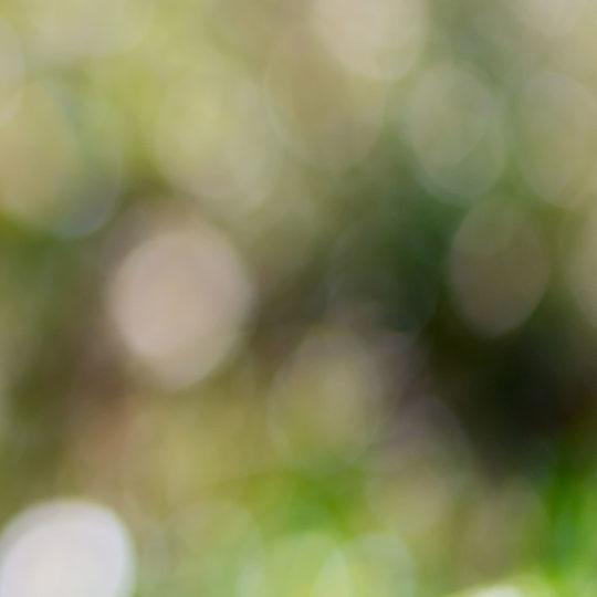 ぼかし緑の Android スマホ 壁紙