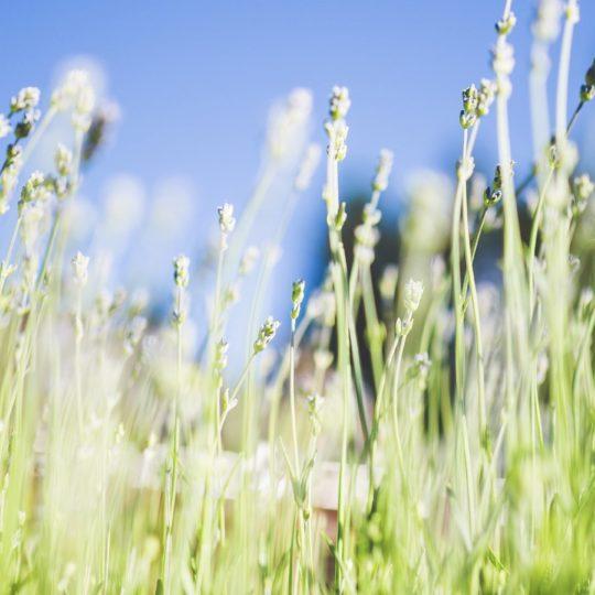 風景植物緑青の Android スマホ 壁紙