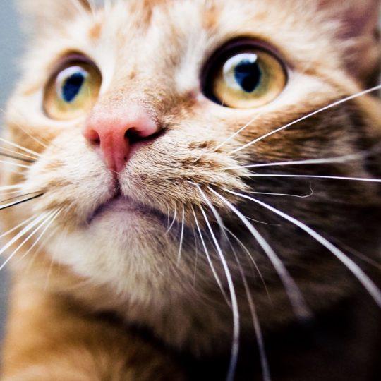 猫動物の Android スマホ 壁紙