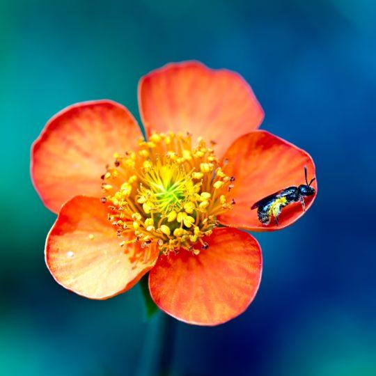 自然花赤の Android スマホ 壁紙