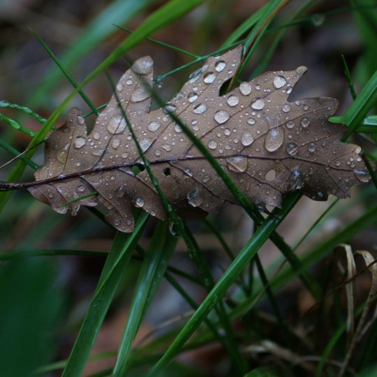 自然枯葉の Android スマホ 壁紙