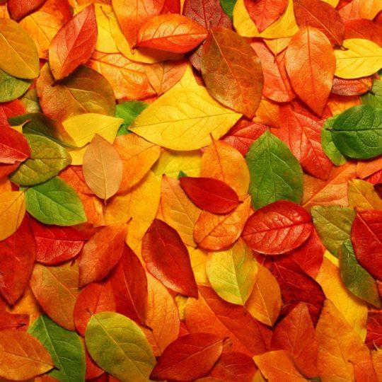 自然紅葉の Android スマホ 壁紙