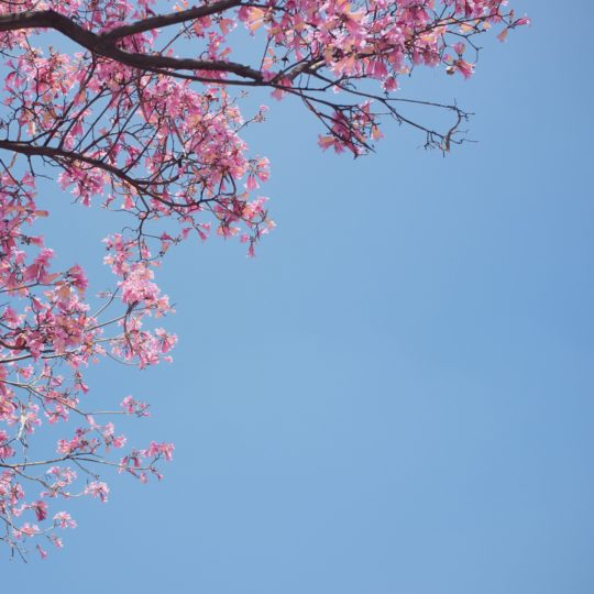 風景自然花桃の Android スマホ 壁紙