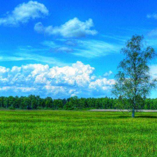 風景草原緑の Android スマホ 壁紙