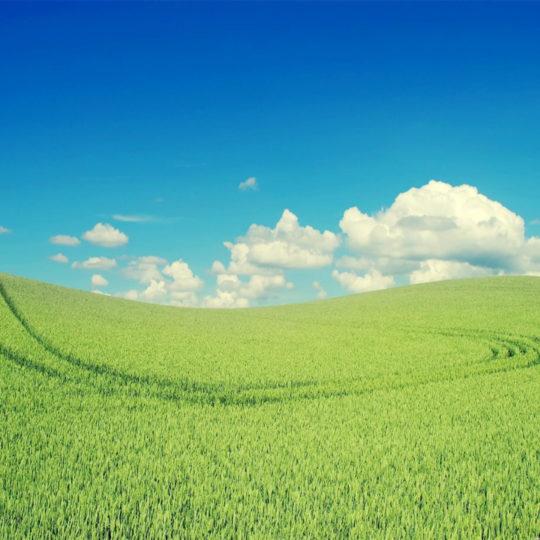 雲空緑の Android スマホ 壁紙