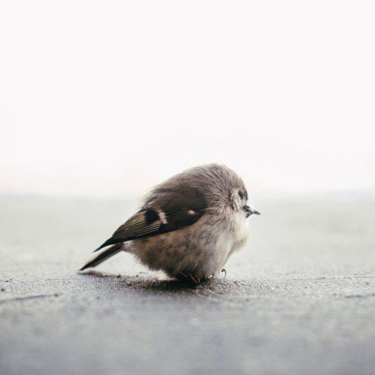動物小鳥の Android スマホ 壁紙