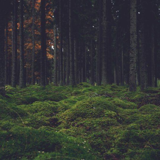 風景森林苔の Android スマホ 壁紙