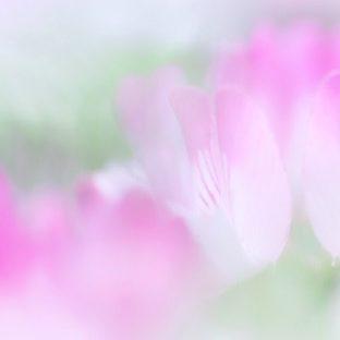 自然花紫の Apple Watch 文字盤壁紙