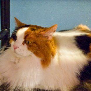 猫動物の Apple Watch 文字盤壁紙