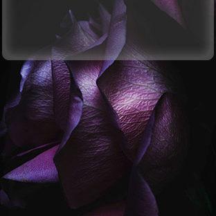 草花紫黒iOS9棚の Apple Watch 文字盤壁紙