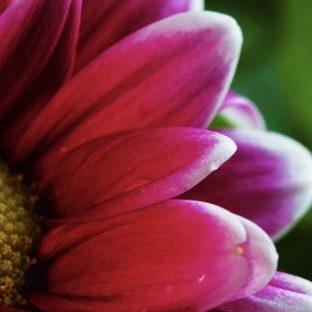 植物花赤紫桃の Apple Watch 文字盤壁紙