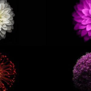 iOS9花画像黒クール
