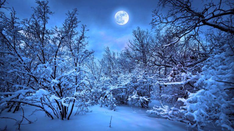 風景雪森林の Desktop PC / Mac 壁紙