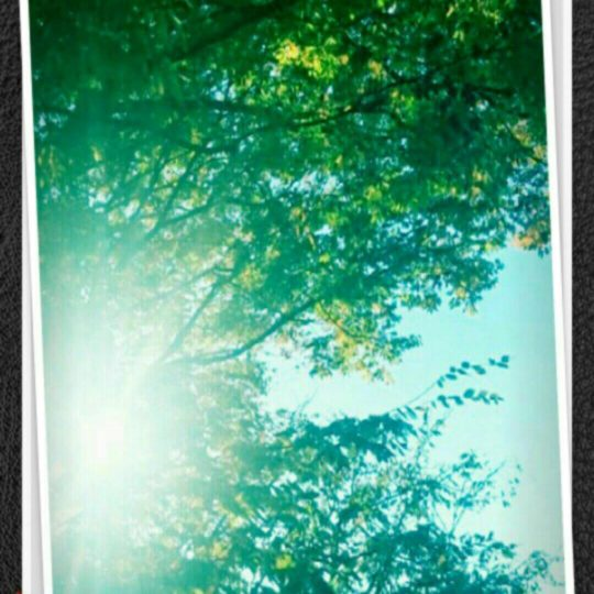 Trees for sun Android SmartPhone Wallpaper