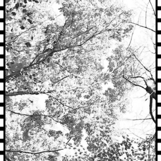 tree film Android SmartPhone Wallpaper