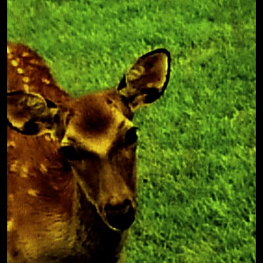 Deer animal Android SmartPhone Wallpaper