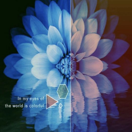 Flower Blue Android SmartPhone Wallpaper