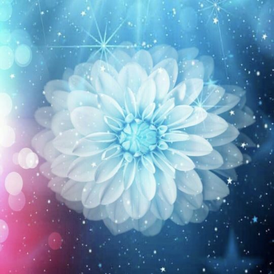 Flower Space Android SmartPhone Wallpaper