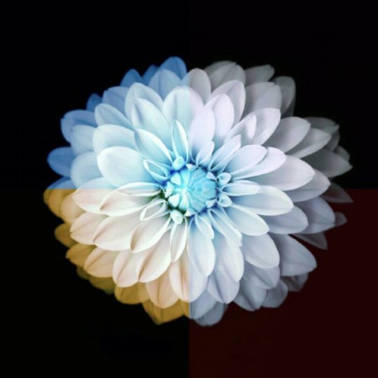 Flower Cool Android SmartPhone Wallpaper